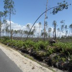 Voilà le résultat après le passage de la tempête de 2009